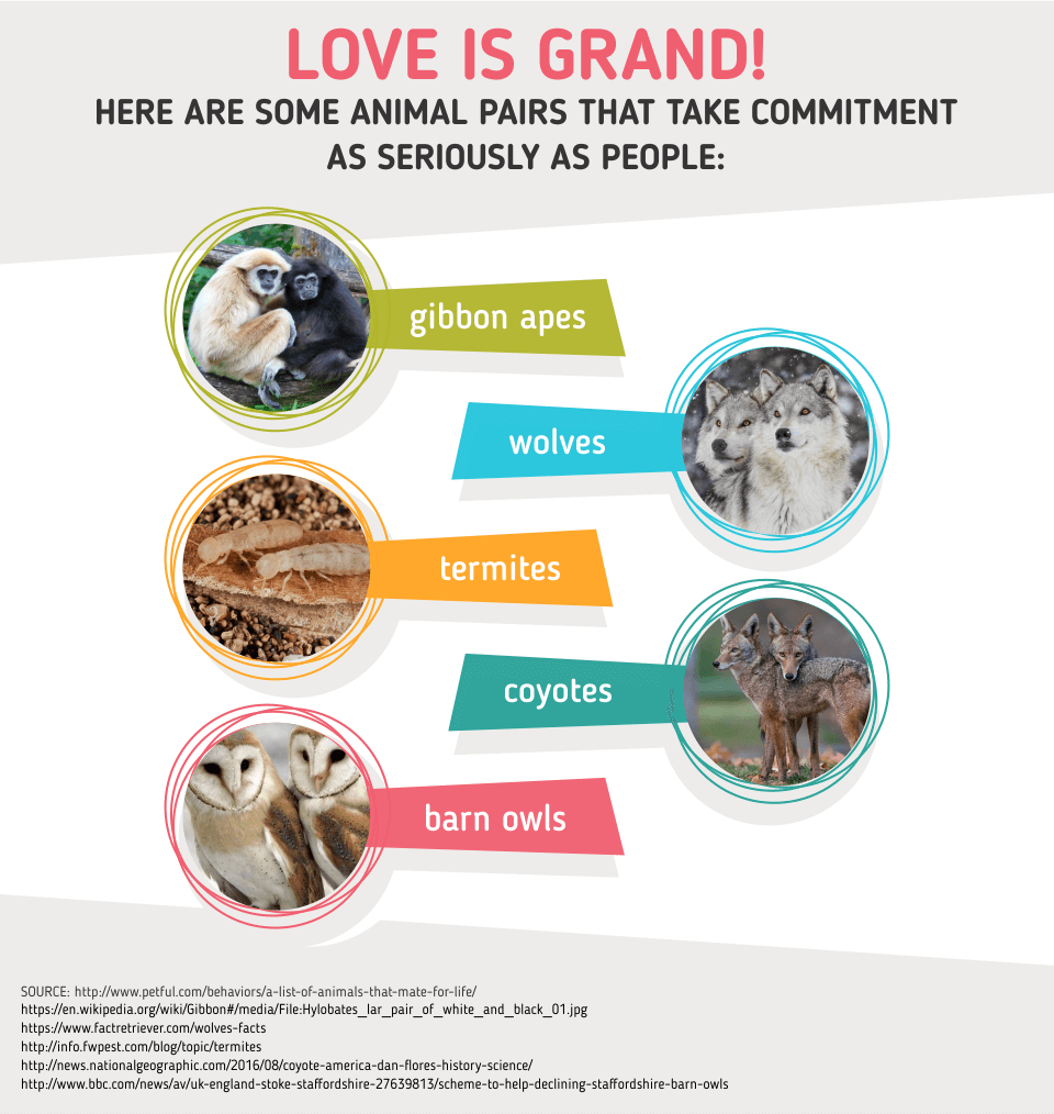 animal love stat