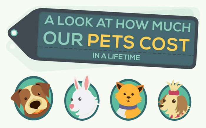 How Much Our Pets Cost in a Lifetime - CreditLoan com®